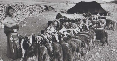 Nomadas-tibetanos