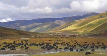 Portada-de-informe-sobre-nomades-tibetanos